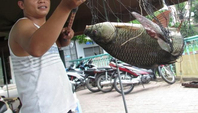Một con cá hồ Tây vừa được đánh bắt - Ảnh: Quang Thế