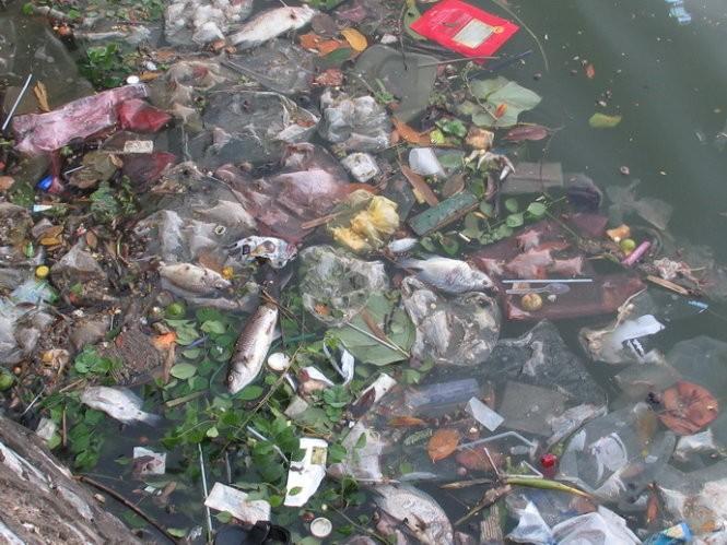 Rác và cá chết nổi ở một góc hồ Tây - Ảnh: Quang Thế