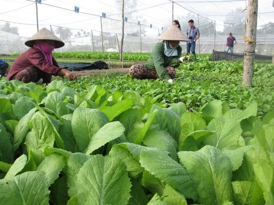 Trang trại rau hữu cơ của Organica được chứng nhận hữu cơ quốc tế