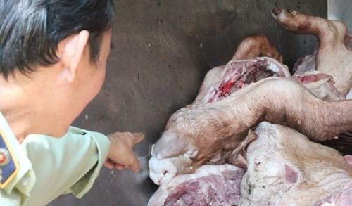 """Hơn 4 tấn thịt heo thối rữa, nổi hạch: Chủ mua, bán nói """"bình thường, có gì đâu"""" 2"""