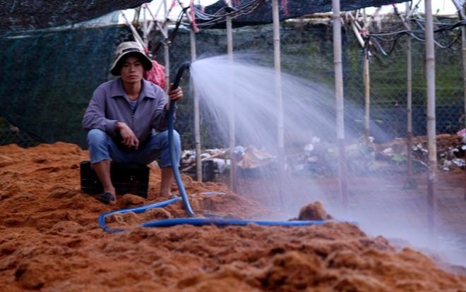 Người Sài Gòn bí mật lên Đà Lạt làm hoa lãi 3 tỷ mỗi năm