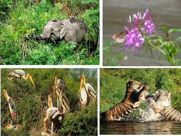 Năm 2010, chuyên gia về hổ, ông Valmik Thapar cũng nói rằng nếu bị tổn hại hay mất mát thì loài hổ Panna sẽ phải mất ít nhất 10 năm mới có thể phục hồi được. Dự án cũng có thể làm ảnh hưởng đến nguồn nước cần thiết cho động vật hoang dã trong khu vực.