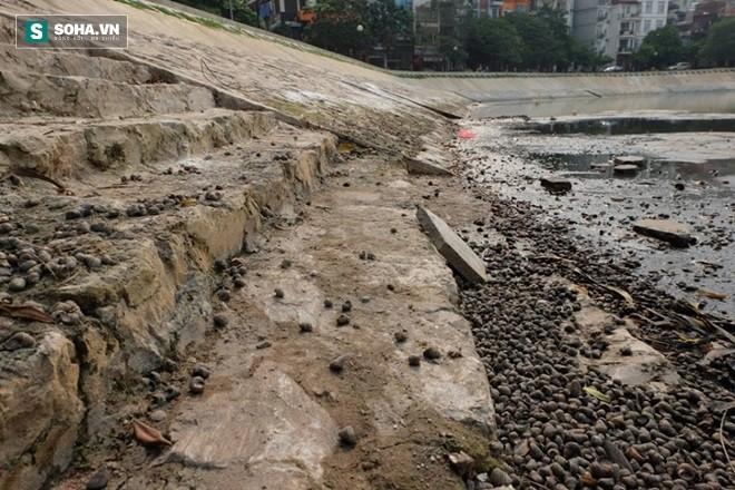 Sau khi tát cạn nước, xuất hiện rất nhiều ốc chết ở mép hồ Ngọc Khánh.