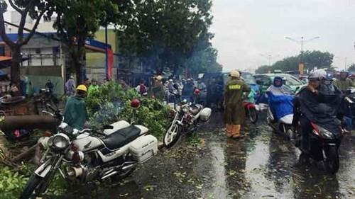 Cây xanh ngã hàng loạt sau mưa, đè người đi đường bị thương - ảnh 1