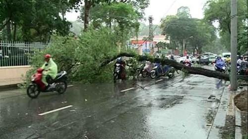 Cây xanh ngã hàng loạt sau mưa, đè người đi đường bị thương - ảnh 4