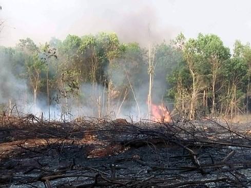 Gần 1.700 ha đất rừng 'biến mất' trước mũi các ban quản lý - ảnh 1