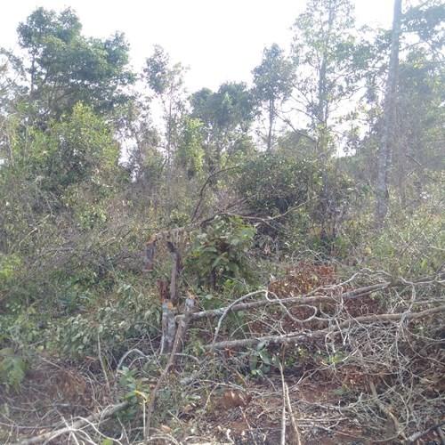 Gần 1.700 ha đất rừng 'biến mất' trước mũi các ban quản lý - ảnh 2