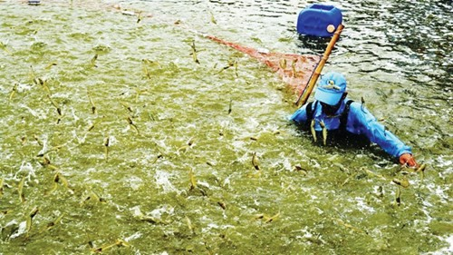 Cấp khống thức ăn thủy sản: Địa phương bó tay, nông dân bất bình - ảnh 1