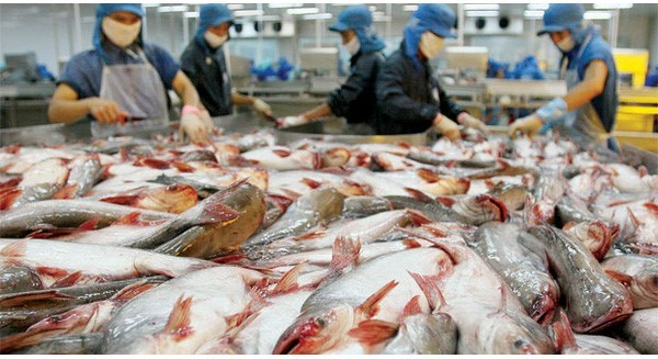 Giám đốc Công ty Thủy sản Bến Tre khẳng định người Nhật không bao giờ ăn những con cá có dấu hiệu bị giết trong đau đớn trong khi nhiều người Việt chẳng thể phân biệt được chuyện này. Ảnh: CafeBiz