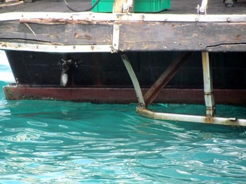 Tàu du lịch bị đâm chìm ngay tại cảng - ảnh 5