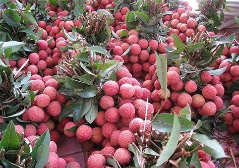 hoa quả, hoa quả việt nam, hoa quả xuất khẩu, hoa quả nhập khẩu, dưa hấu, thanh long, vú sữa, bưởi, chuối, vải thiều, hoa quả trung quốc