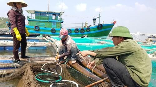 Cá chết bất thường tại biển Thanh Hóa: Có lặp lại kịch bản Formosa? - ảnh 2