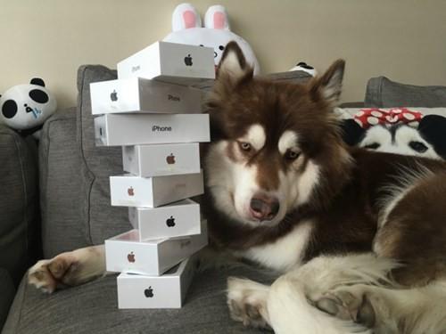 Đặt mua iPhone 7 qua mạng, nhận được iPhone…3 +4 - ảnh 2
