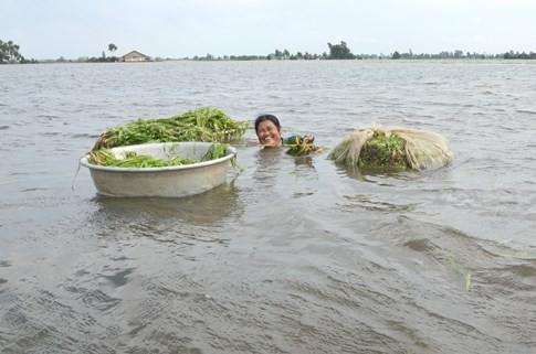 Người dân miền Tây lặn ngụp dưới nước lũ kiếm tiền chục triệu - ảnh 5