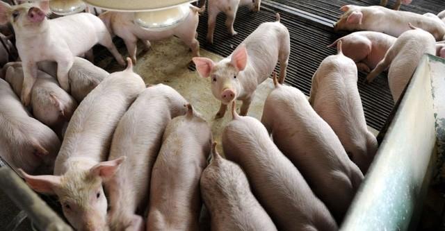 Bảo hộ nông nghiệp nhìn từ chuyện giải cứu thịt lợn ở Trung Quốc hay mía đường ở Mỹ - Ảnh 1.
