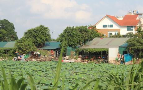 Nha hang banh tom, bun oc 'bua vay' ho Dam Tri, Ha Noi - Anh 4