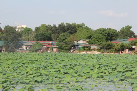 Nha hang banh tom, bun oc 'bua vay' ho Dam Tri, Ha Noi - Anh 6