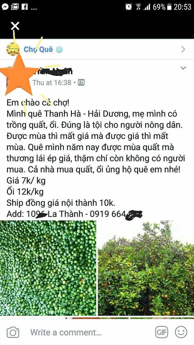 """Một facebooker kêu gọi mọi người """"giải cứu"""" vườn quất của mẹ trồng tại Hải Dương. Ảnh: Chụp từ FB"""
