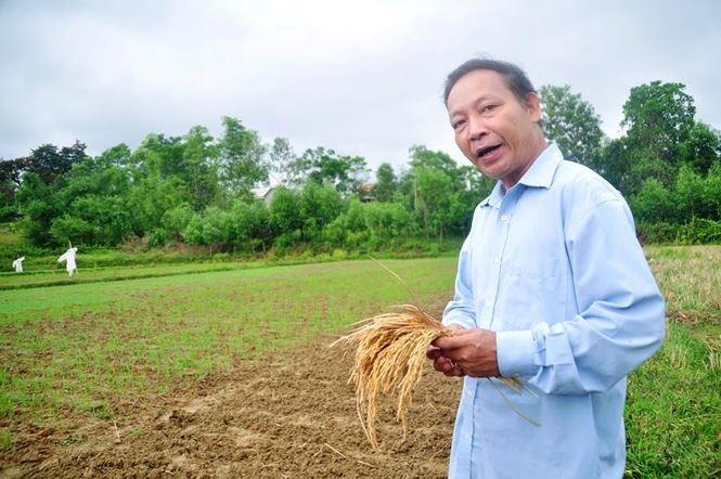 """ts_le_tien_dung_lewl_itmn Chuyên gia cảnh báo tỏi Lý Sơn bị tỏi voi Nhật Bản """"bóp chết"""""""