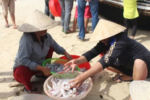 Dân biển hồ hởi đón lộc trời cá khoai, mỗi chuyến kiếm 3-4 triệu đồng - ảnh 3