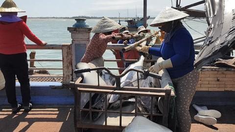 Trúng đậm cá ngừ những ngày cận Tết, có thuyền lãi vài trăm triệu - ảnh 2
