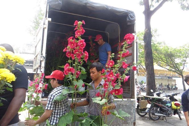 Lo bị 'ép rác', hoa tết xả hàng sớm ở Sài Gòn - ảnh 15