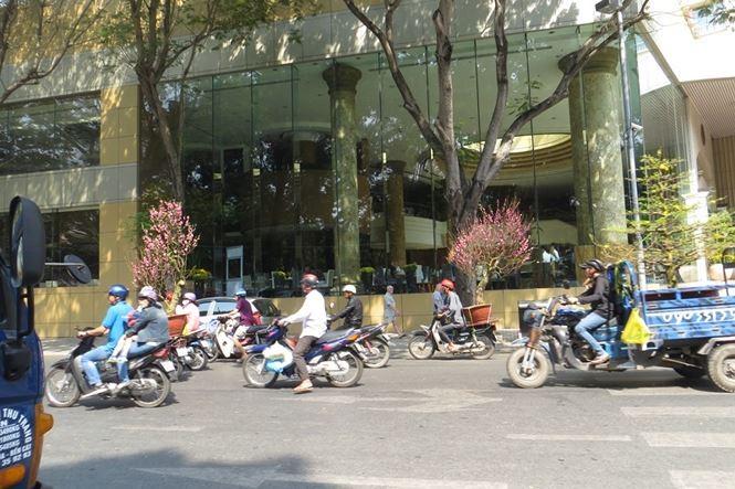 Lo bị 'ép rác', hoa tết xả hàng sớm ở Sài Gòn - ảnh 13