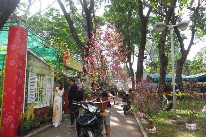 Lo bị 'ép rác', hoa tết xả hàng sớm ở Sài Gòn - ảnh 2