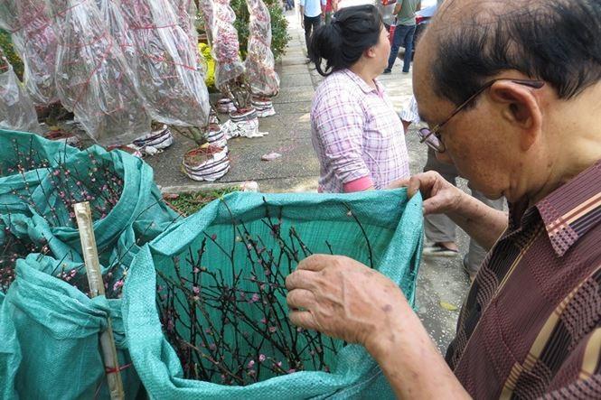 Lo bị 'ép rác', hoa tết xả hàng sớm ở Sài Gòn - ảnh 5