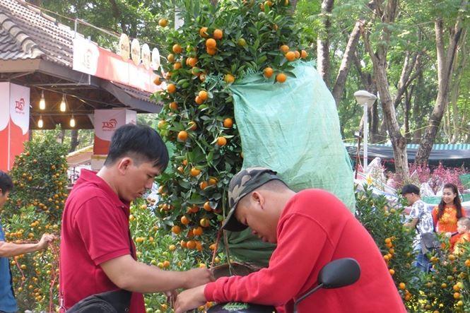 Lo bị 'ép rác', hoa tết xả hàng sớm ở Sài Gòn - ảnh 3