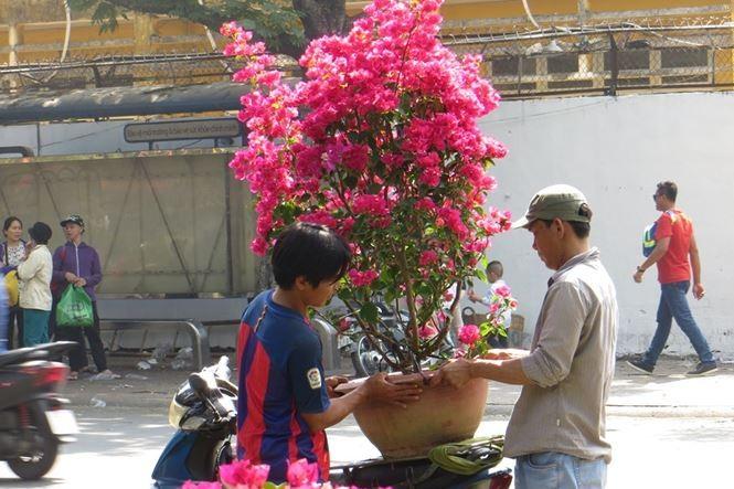 Lo bị 'ép rác', hoa tết xả hàng sớm ở Sài Gòn - ảnh 8
