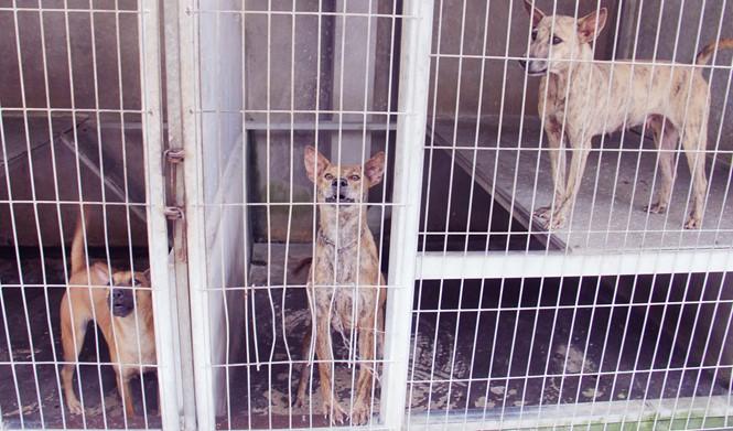 Chàng trai 8X nuôi cơ ngơi chó Phú Quốc thu hàng trăm triệu đồng ở Sài Gòn - ảnh 13