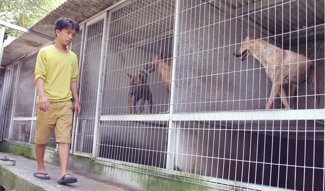 Chàng trai 8X nuôi cơ ngơi chó Phú Quốc thu hàng trăm triệu đồng ở Sài Gòn - ảnh 10