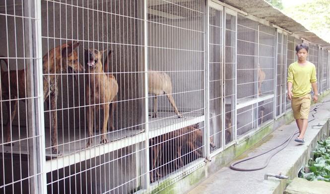Chàng trai 8X nuôi cơ ngơi chó Phú Quốc thu hàng trăm triệu đồng ở Sài Gòn - ảnh 3