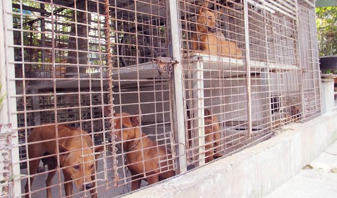 Chàng trai 8X nuôi cơ ngơi chó Phú Quốc thu hàng trăm triệu đồng ở Sài Gòn - ảnh 9