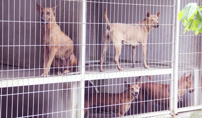 Chàng trai 8X nuôi cơ ngơi chó Phú Quốc thu hàng trăm triệu đồng ở Sài Gòn - ảnh 8