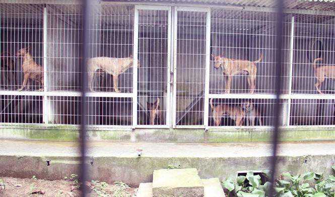 Chàng trai 8X nuôi cơ ngơi chó Phú Quốc thu hàng trăm triệu đồng ở Sài Gòn - ảnh 7