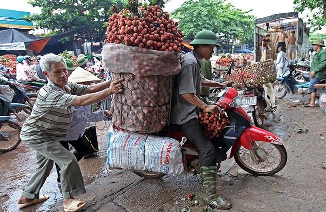 vải thiều,vải thiều lục ngạn,nông dân làm giàu,nông sản rớt giá