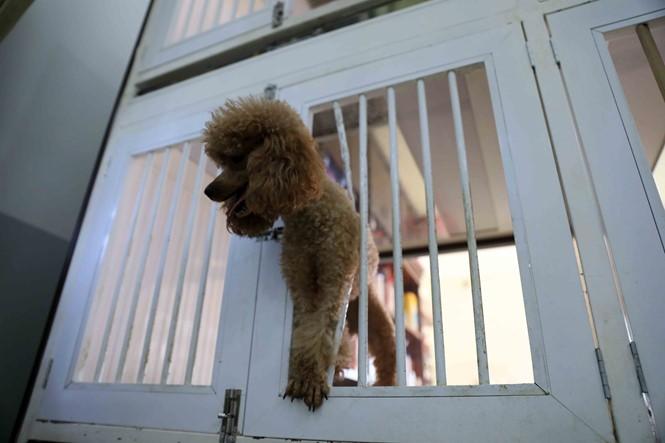 Hốt bạc ngày Tết nhờ nhận nuôi chó ký gửi - ảnh 2