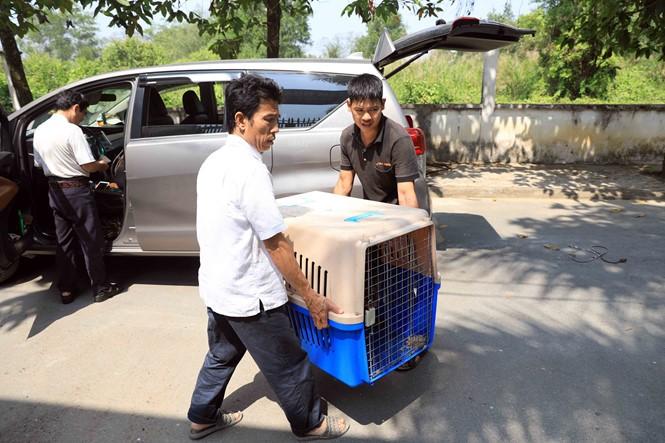 Hốt bạc ngày Tết nhờ nhận nuôi chó ký gửi - ảnh 9