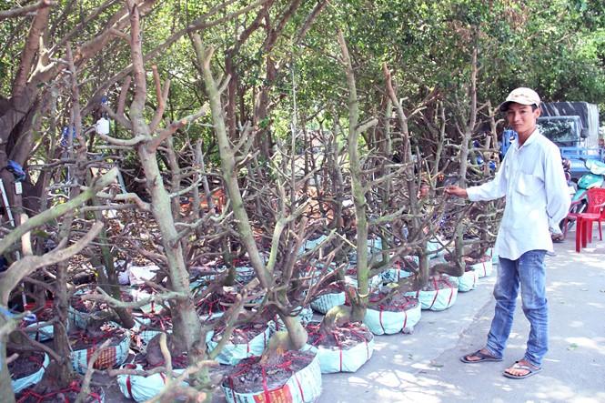 Người Sài Gòn thu tiền tỉ nhờ bán cả trăm gốc mai bonsai sau tết - ảnh 16