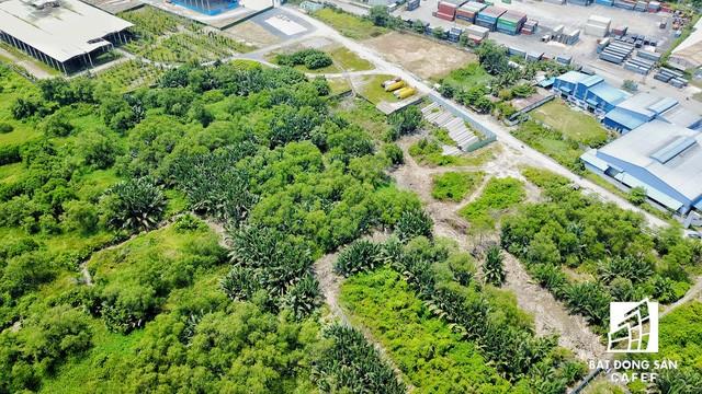 Nhìn từ trên cao, bên trong dự án hơn 100ha này vẫn toàn là cây dại
