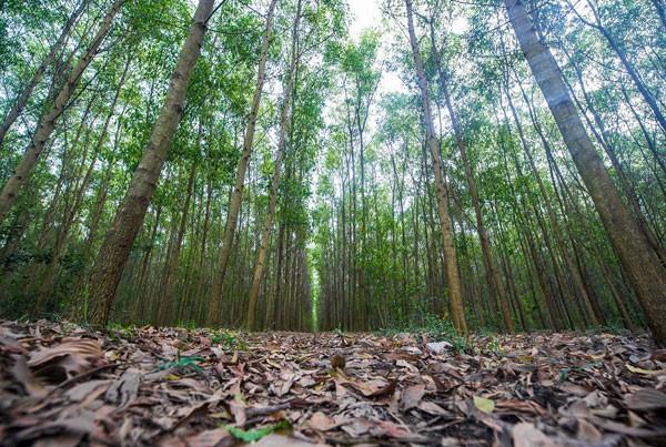 trồng-rừng, ngân-hàng-thế-giới, world bank, dự-án-lâm-nghiệp, cải-tạo-đất, nông-dân, thoát-nghèo, tỷ-phú