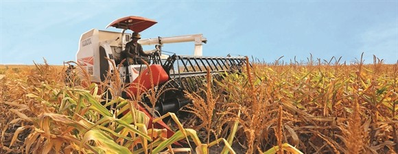 Thu hoạch bắp tại nông trại của HAGL Agrico