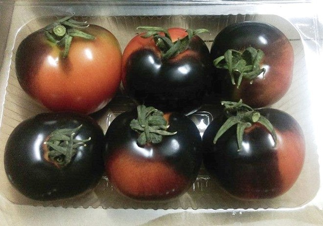 Cà chua đen đắt gấp 5 lần loại thường, muốn mua cũng khó
