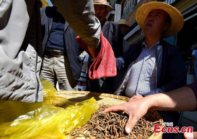 Đông trùng hạ thảo, Tây Tạng, Trung Quốc, rau xanh