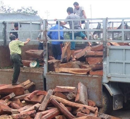 Bắt giữ xe vận chuyển gỗ trắc trị giá hàng tỷ đồng - Ảnh 1