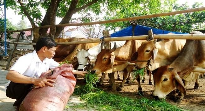 Thịt ngoại thống lĩnh thị trường, thịt nội