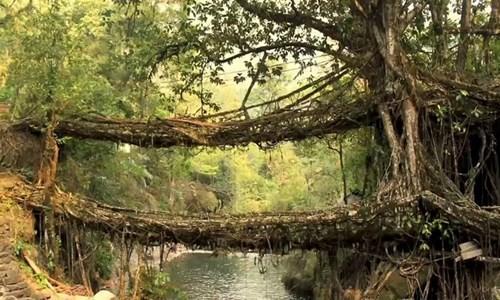 Những cây cầu độc đáo trên thế giới - ảnh 4