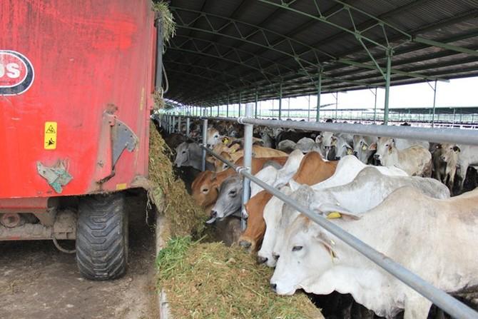Chiến lược nội hóa bò ngoại - Kỳ 2: Kiểm soát thịt bò đến tận... bàn ăn - ảnh 1